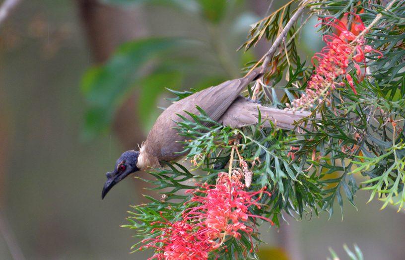 Gimme shelter: Birdscaping