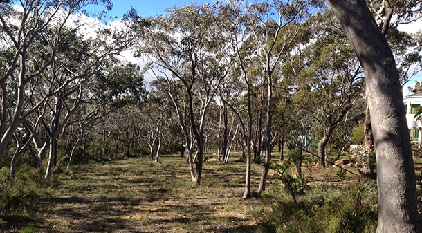 """Lisa and Shawn's 2800 sqm block in the Blue Mountains is level and treed, with a Bushfire Attack Level of 29 (medium). They bought it """"for its size, its flat and north-facing nature, quiet location, and access to potential employment opportunities""""."""