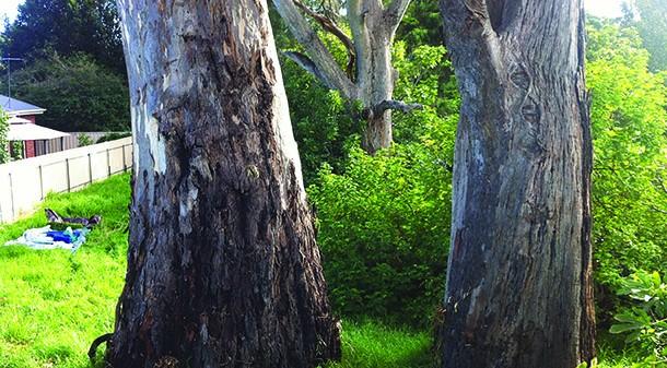 The suburban Adelaide block has three large river red gums, two of which are dead and slated for removal. However, Kylie and Jared plan to retain the third to support local birdlife and provide shade.
