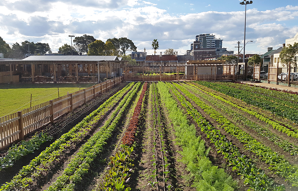 Pocket City Farms producers a range of fresh produce from formerly neglected urban spaces in Sydney. Their pilot farm is at Camperdown Commons.