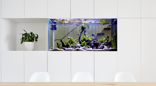 Integrated into the wall between the hallway and the dining room, the fish tank provides interest and a sense of connection – and the large volume of water could also be used as thermal mass if Andrew decided to convert it to a cold-water ecosystem.