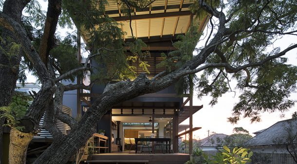 An old jacaranda tree – the only non-native presence in the yard – is a striking focal point.