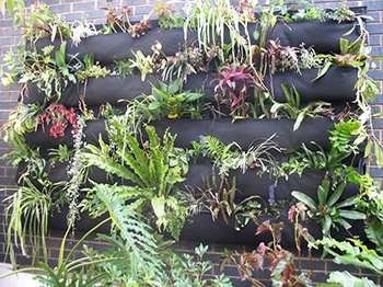 Straight up: Vertical garden lessons - Renew
