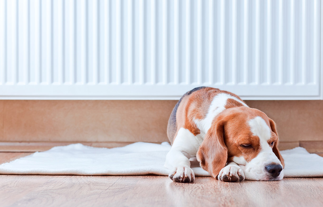 Beat The Winter Chills A Guide To Electric Heating Options Renew Common Permanently Mounted Space Heater Dog Has Rest On Wooden Floor Near Warm Radiator