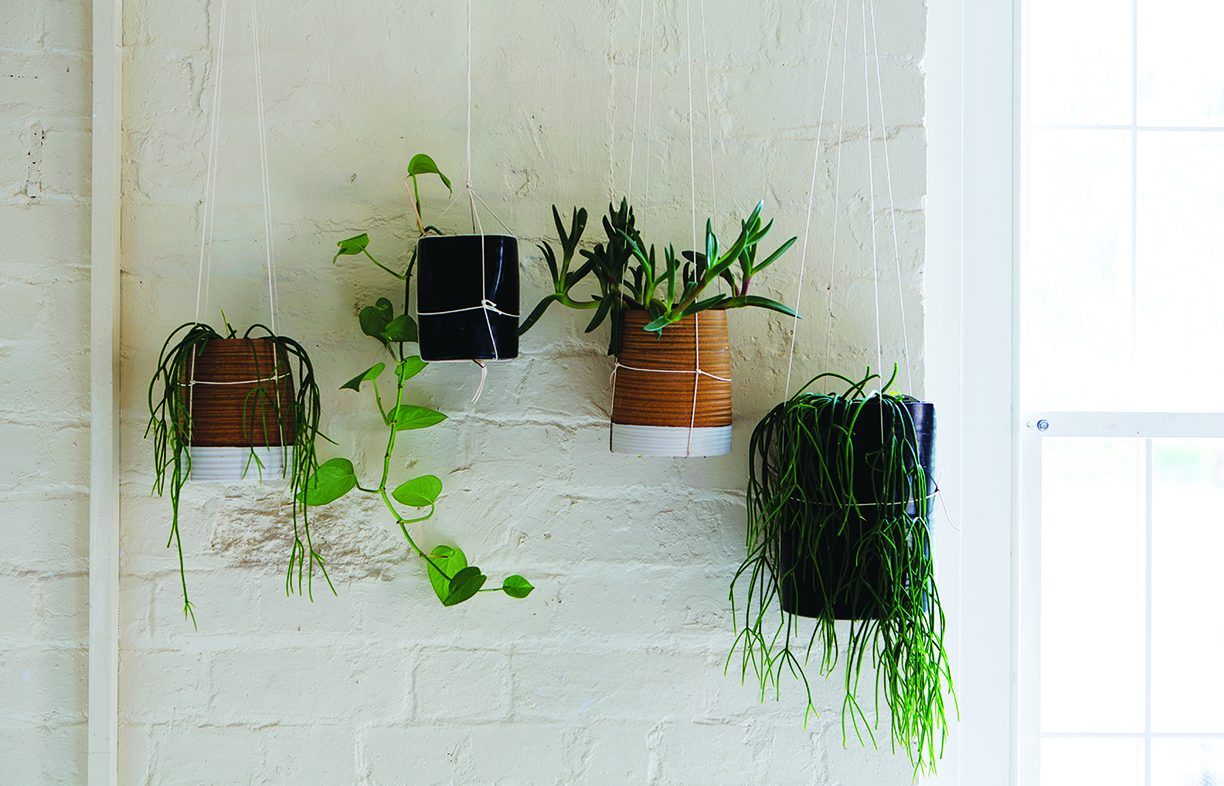 Indoor plants have been shown to make significant improvements to air quality, and to have a positive impact on physical and mental wellbeing.