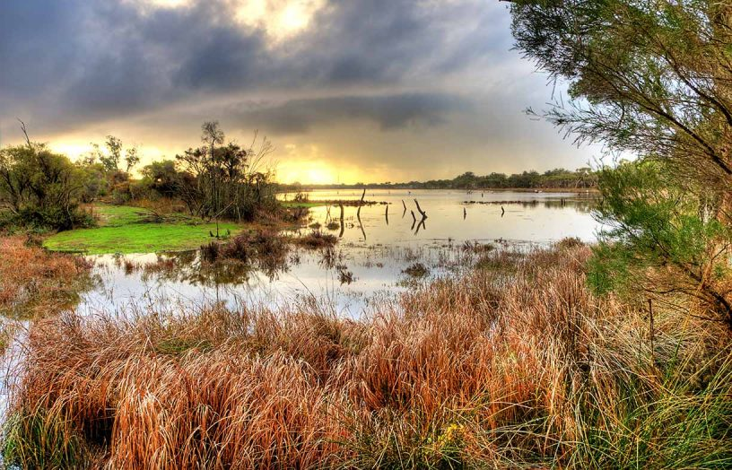 Design workshop: Wetland retreat