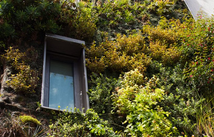Biophilic Housing Design