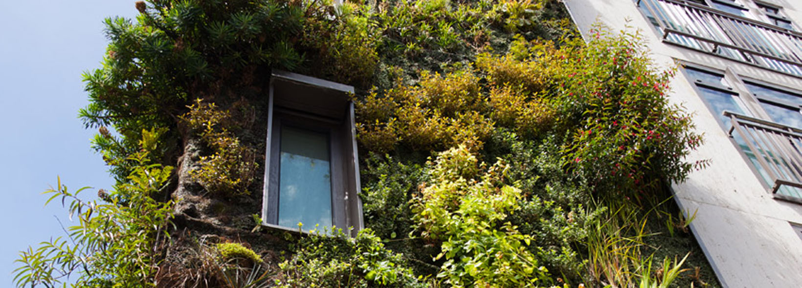 Biophilic Housing Design