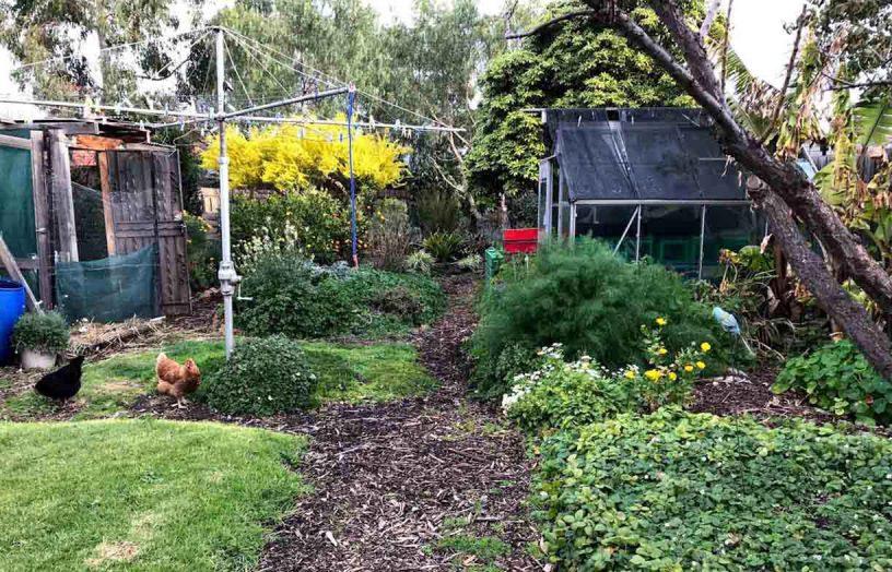 DIY: Sheet mulch and hot compost