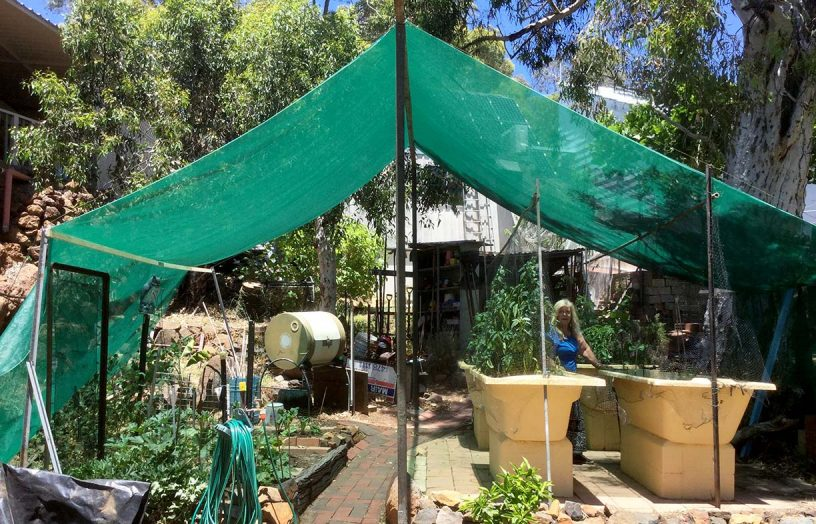 DIY: All-season vegie shade tent