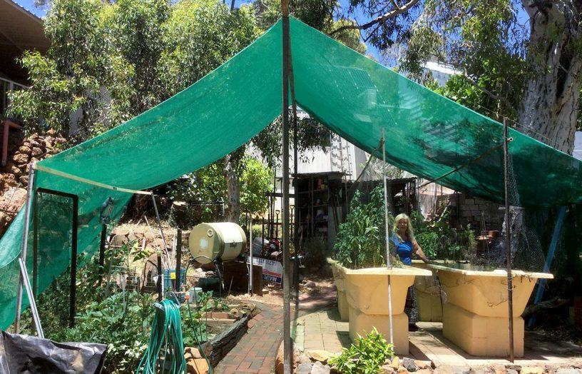 DIY: All-season vegie shade tent